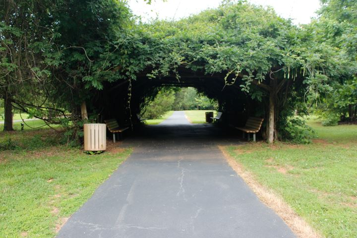 Arbor with vine and paved walking path